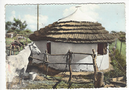 EN CAMARGUE - 43 .- Cabane De Gardians - France