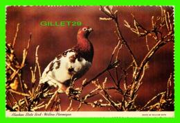 OISEAUX - BIRDS - ALASKAN STATE BIRD, WILLOW PTARMIGAN - ALASKA JOE - - Oiseaux