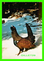 OISEAUX, BIRDS - BALZENDER AUERHAHN - GRAND TETRAS - CAPER CAILLIE - TETRAE UROGALLUS - RASTL - - Oiseaux