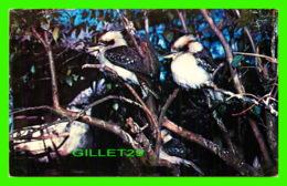 OISEAUX, BIRDS - THE KOOKABURRA 0 WRITTEN - AUSTRALIAN NEWS - - Oiseaux