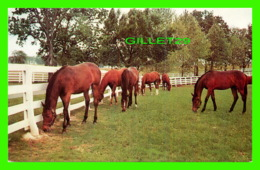 CHEVAUX, HORSES - GREEN PASTURES - PHOTO BY FREE LANCE PHOTOGRAPHERS GUILD INC - TRAVEL - - Chevaux