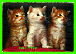 CATS, CHATS - 3 BEAUX CHATONS - KRUGER No 900/37 - - Chats