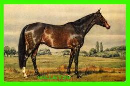 CHEVAUX, HORSES - RACE PUR - EDITION STAHK - - Chevaux