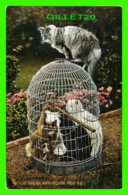 CATS, CHATS - CHATS DANS UNE CAGE D'OISEAUX - IS THERE ANY ROOM FOR ME - TRAVEL IN 1912 - RAPHAEL TUCK & SONS - - Chats