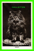 CATS, CHATS - WHISKERS - TRAVEL IN 1912 - HART PUBLISHING CO - - Chats