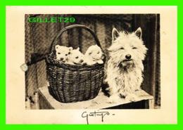 DOGS - CHIENS - MAMAN AVEC SES PETITS ENFANTS - - Chiens
