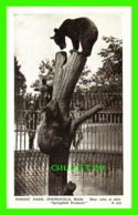 BEARS, OURS - FOREST PARK SPRINFIELD, MA - BEAR CUBS AT PLAY - TRAVEL - - Ours