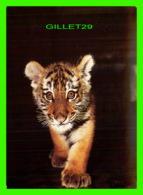 TIGRE - TIGER - BÉBÉ TIGRE DE RUSSIE - 1984 - Tigres
