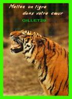 TIGRE - TIGER - METTEZ UN TIGRE DANS VOTRE COEUR - CIRCULÉE EN 1984 - COLLECTION ORION - - Tigres