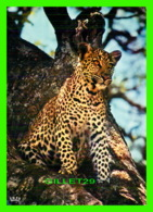 LÉOPARD, - FAUNE AFRICAINE -  IRIS - - Animaux & Faune