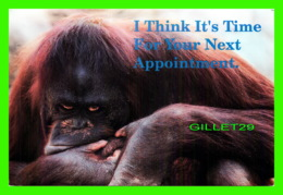 GORILLE - I THINK IT'S TIME FOR YOUR NEXT APPOINTMENT - DR. F. GRTANT HILL, CATONSVILLE, MD - - Singes