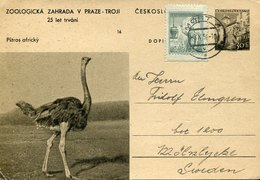 44131 Ceskoslovensko, Stationery Card 30h. Zoologika V. Praze, Showing A  Ostrich,autruche, Strauss - Autruches