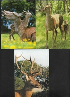 Penvénan élevage De Cervidés Cerf Elaphe - Kerviniou Porz Gwenn Canton De Tréguier & Lannion Bretagne - 8 Belles Cartes - Penvénan