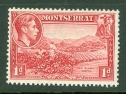 Montserrat: 1938/48   KGVI   SG102    1d  [Perf: 13]    MH - Montserrat