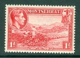 Montserrat: 1938/48   KGVI   SG102a    1d  [Perf: 14]    MH - Montserrat