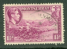 Montserrat: 1938/48   KGVI   SG103    1½d  [Perf: 13]    Used - Montserrat