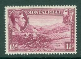 Montserrat: 1938/48   KGVI   SG103a    1½d  [Perf: 14]    MH - Montserrat