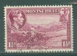 Montserrat: 1938/48   KGVI   SG103a    1½d  [Perf: 14]    Used - Montserrat
