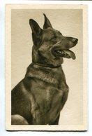 EAST EUROPEAN SHEPHERD, DOG, CHIEN, PERRO. POSTAL CPA CIRCULATED 1937 -LILHU - Chiens