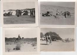 Militaires Sahara - Lot De 4 Photos - Guerre, Militaire