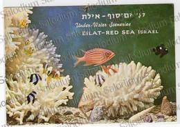 EILAT RED SEA ISRAEL ACQUARIO FISH CORAL CORAL REEF - Israele