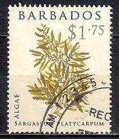 Barbados 2008 -  Algae - Barbados (1966-...)