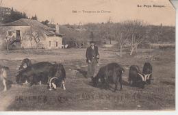 PAYS BASQUE - Troupeau De Chèvres ( ETAT )   PRIX FIXE - Francia