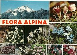 LAGO  MAGGIORE--     FLORA  ALPINA  ANNI  60 - Fiori