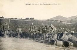 34 - Siran - Les Vendanges - Comportes - Cliché E P - Otros Municipios