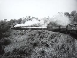 Rare!  Belle Photo Ancienne Ouganda Années 1950 Train Culture Gare Locomotive Tampon Photographe - Gares - Avec Trains