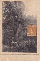 BOCOGNANO - Un Sapin Poussant Sur Un Chataignier - Francia