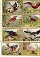 Groep Kl 001 - 40 Comos -   Oiseaux - Vogels - Vieux Papiers