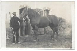 Carte-photo...cour De Ferme...cheval...animée... - Elevage