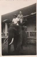 Photo. Militaire : Siem-reap - Cambodge : Poulet Le Militaire Sur Un éléphant - : 1948 : Format 8,6cm X 6cm - War, Military