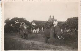 Photo. Militaire : Siem-reap - Cambodge : Passage Des éléphants - Promenade De La Cie  - : 1948 : Format 8,6cm X 6cm - War, Military