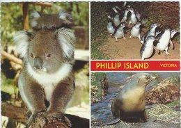 Australia - Phillip Island. Sent To Denmark 1984.  # 06969 - Australia