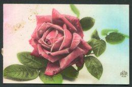 12120 CPA  Rose - Fleurs