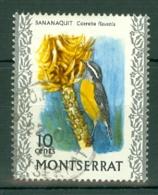 Montserrat: 1970/74   Birds   SG247    10c     Used - Montserrat