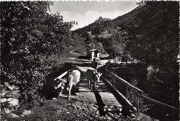 Vezza D'Oglio Ponte Delle Rocche In Val Grande - Brescia
