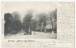 Veurne - Furnes - Avenue Des Tilleuls - Editeurs Lust Soeurs, Furnes - 1904 - Veurne