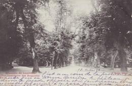 LUNEVILLE - Souvenir - Vue Intérieure Des Bosquets - Luneville