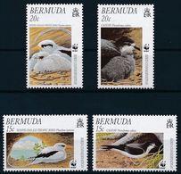 Bermuda 2001 - WWF Birds - Endangered Species - Bird Conservation  MINT - Bermudas