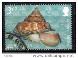 Bermuda 2002 - Shells - Bermudas
