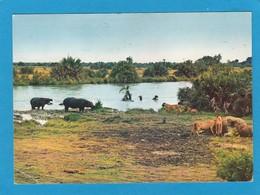 PARC NATIONAL ALBERT.LIONS ET HIPPOPOTAMES. - Kinshasa - Léopoldville