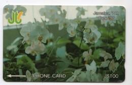 JAMAIQUE REF MV CARDS JAM-13C 100$ Annee 1993 CN : 13JAMC WHITE ORCHIDEE - Jamaica