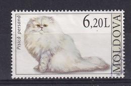 Moldova 2007, Cat, Minr 589, Vfu. Cv 4,50 Euro - Moldavia