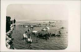 Foto  Privatfoto Am Ufer - Schwäne 1918 Privatfoto - Ansichtskarten