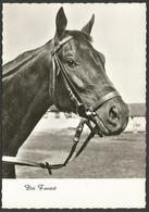 Animals------Horse------old Postcard - Chevaux