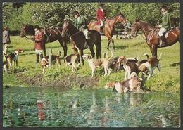 Animals------Horses------old Postcard - Pferde