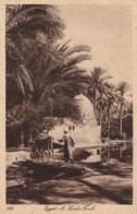 AN10 Egypt, A Saint's Tomb - Egypt